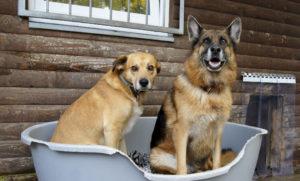 Tierheim Bremen – Hunde