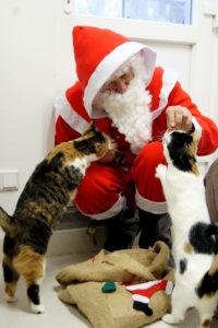 Tierheim Bremen – Weihnachtsmann füttert Katzen